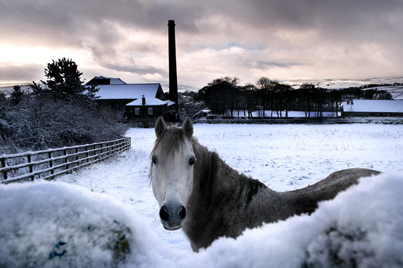 Horse, Old Town - Nigel Hillier