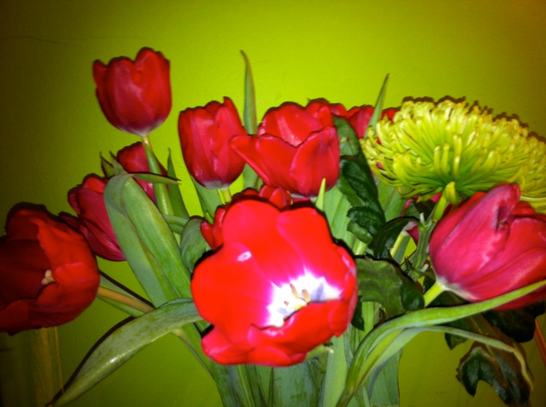 I love red tulips in my kitchen as they are stunning with the lime green walls