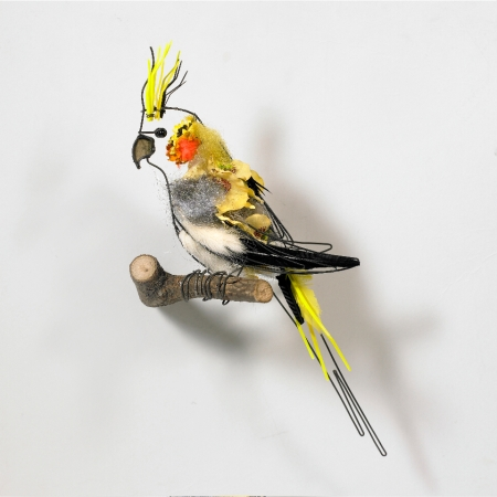 Cockatiel - Cathy Miles