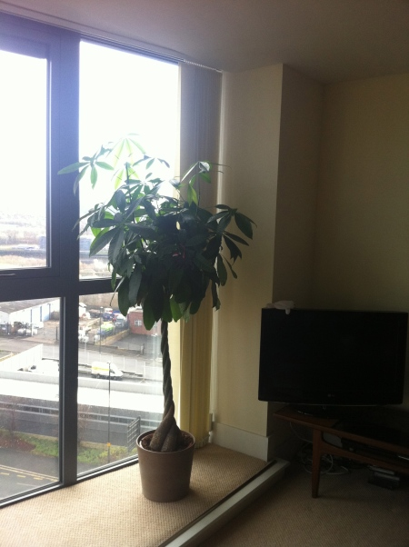 Adam's 'Christmas Tree' and view out of his living room window