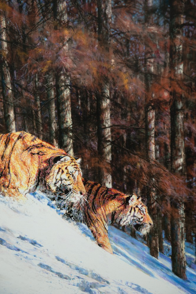 'Amur Ambush' by Stella Mays