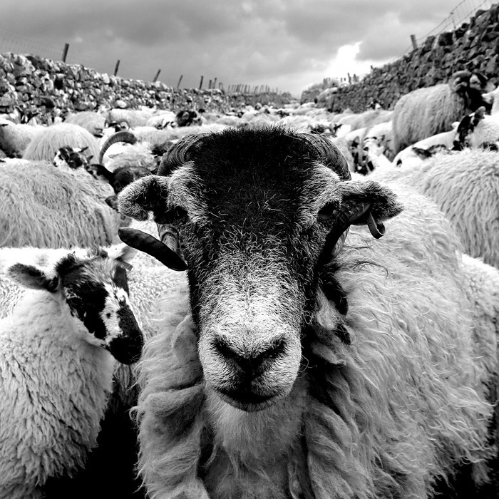 'queue-at-the-baa'