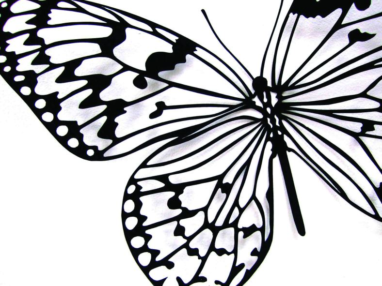 'Rice Paper' Butterfly