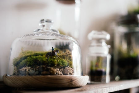 Isobel's terrariums come in all shapes and sizes