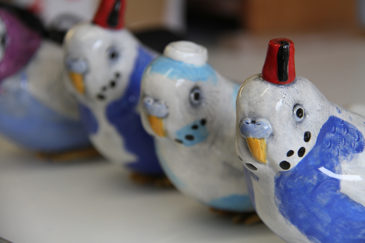 Selection of small budgies - Charlotte Miller