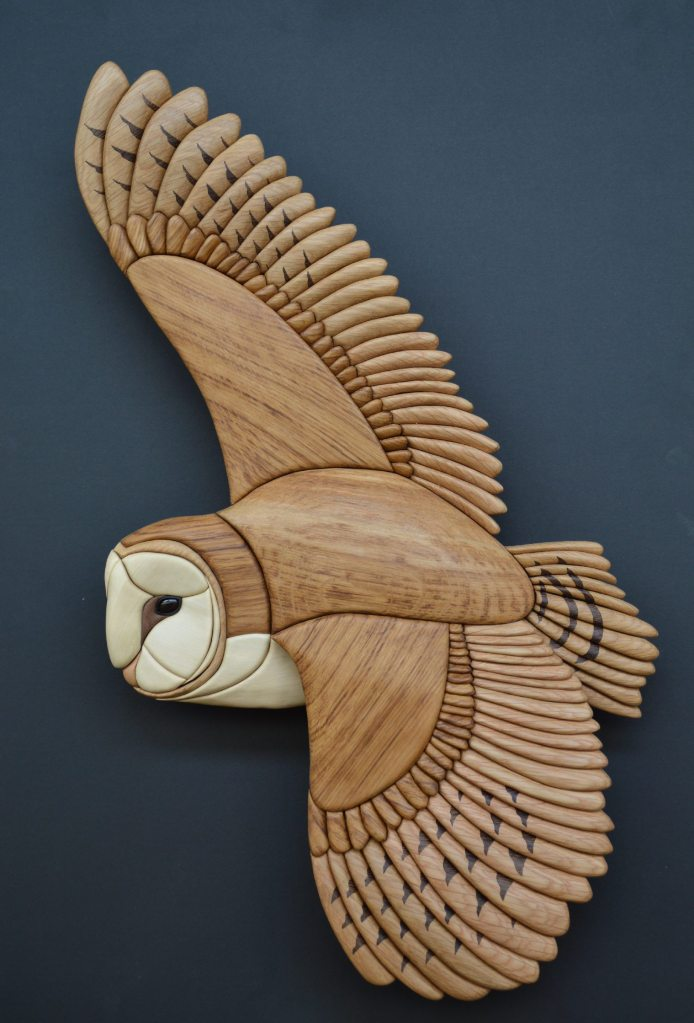 We are now showcasing this amazing life size Barn Owl in Heart Gallery